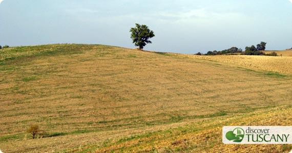 Maremma Hills Landscape