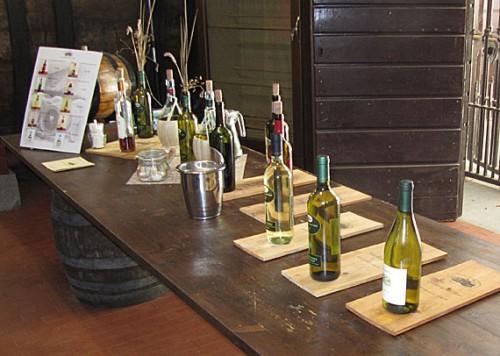fattoria-del-teso-wine-tast