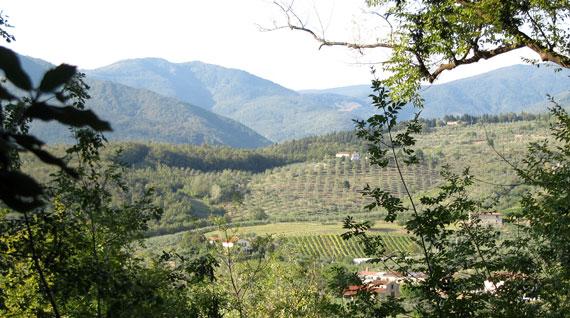 thats-prato-panorama