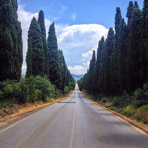 The Avenue of Cypresses that leads to Bolgheri - photo credit @mandidatchler
