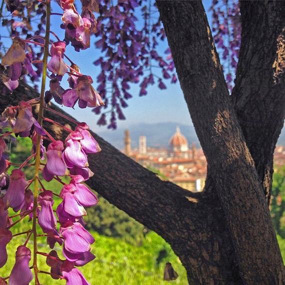 La primavera invade con i suoi colori e profumi il giardino di Villa Bardini - photo credit @visit_florence