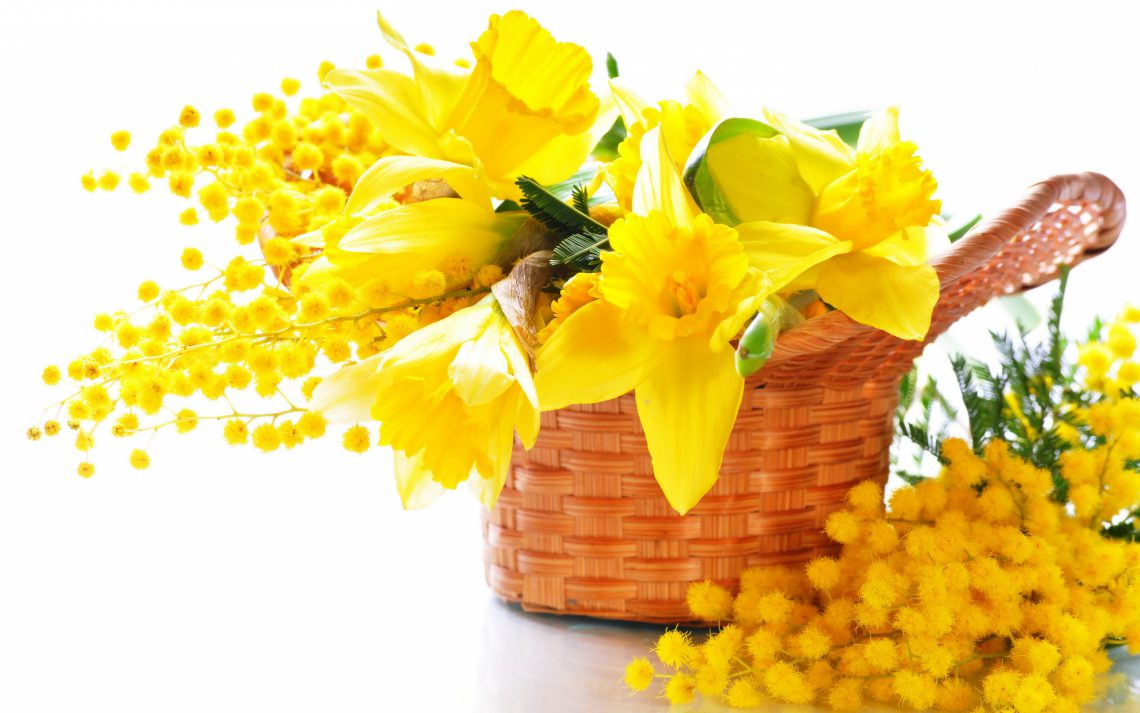 Yellow Flowers, the classical gift in Italy for the Festa della Donna