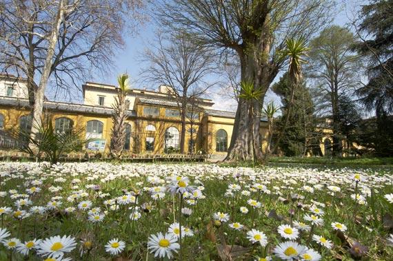 Aiutateci a ristrutturare il giardino botanico di firenze for Giardino orto botanico firenze